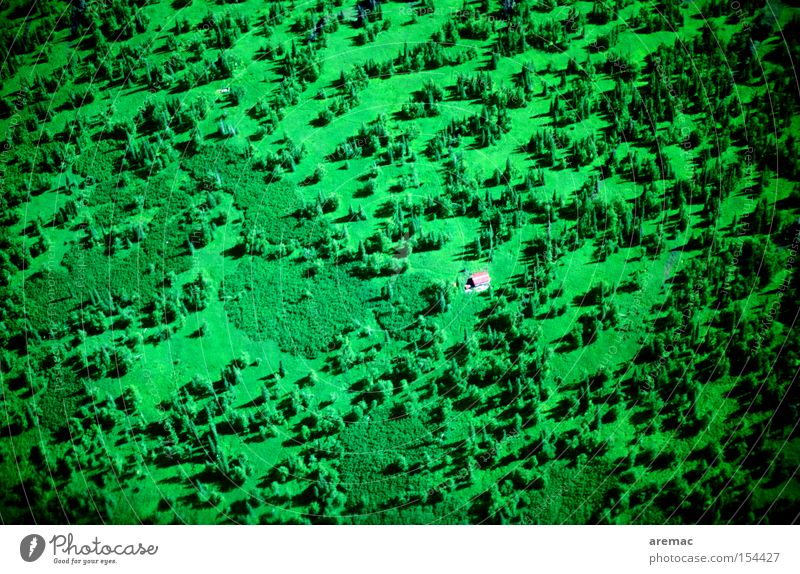 House in the green House (Residential Structure) Forest Green Alaska USA Americas Aerial photograph Loneliness