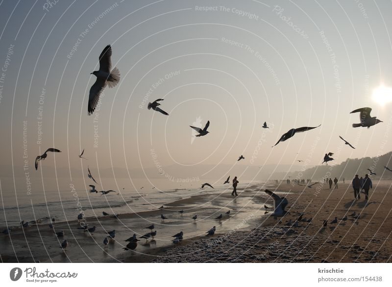 Baltic New Year Seagull Baltic Sea Beach Winter Binz Cold Ocean Fog Sunrise