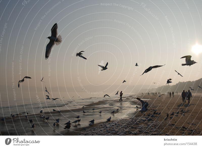 Ocean Winter Beach Rügen Cold Fog Baltic Sea Seagull Binz