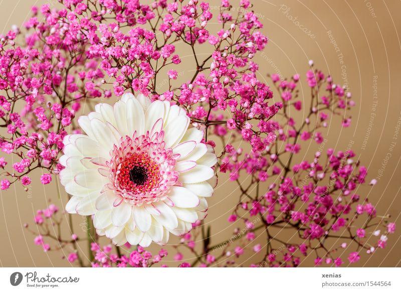 White Flower Black Blossom Brown Pink Gold Gerbera Baby's-breath Cream yellow