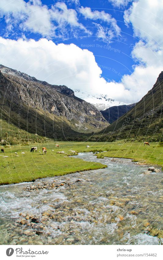 River in the Andes in Peru National Park Landscape High plain Mountain Clouds Gorgeous Beautiful Brook South America Romance Meadow