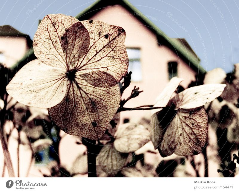 flowers blossoms blue Beautiful Winter House (Residential Structure) Garden Flower Leaf Blossom Blossoming Faded Cold Dry Blue Brown Winter festival Thread