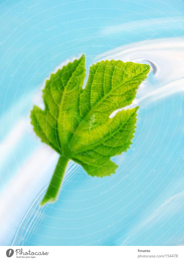 Leaf and water Water Fig Fig leaf Current Flow Blue Green Beautiful Float in the water