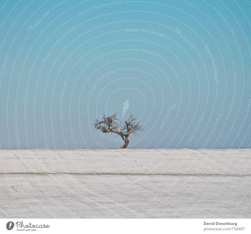 Sky Tree Blue Winter Snow Meadow Field Branch Hill Tree trunk Beautiful weather Treetop