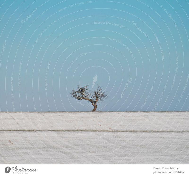 Sky Tree Blue Winter Snow Meadow Field Branch Hill Tree trunk Beautiful weather Treetop