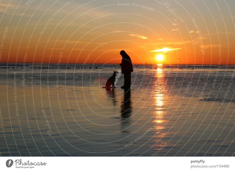 Human being Sun Ocean Beach Animal Cold Dog Ice Coast Sunset North Sea Mud flats Celestial bodies and the universe