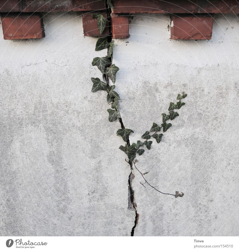 Nature Old Wall (barrier) Power Hope Derelict Brick Connect Ivy Breach Indecisive Creeper Symbiosis