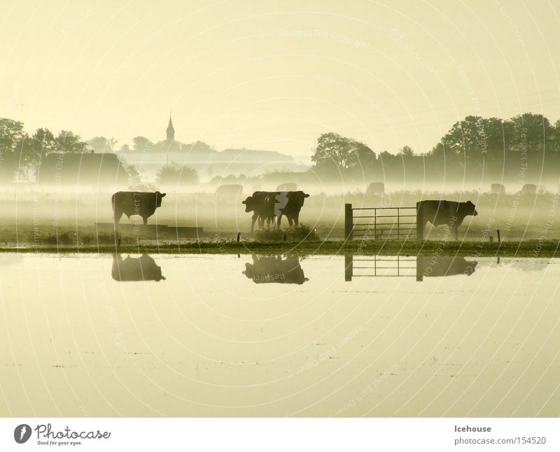 Autumn Lake Fog Church Village Cow Lakeside Mammal Dusk Fold Deluge