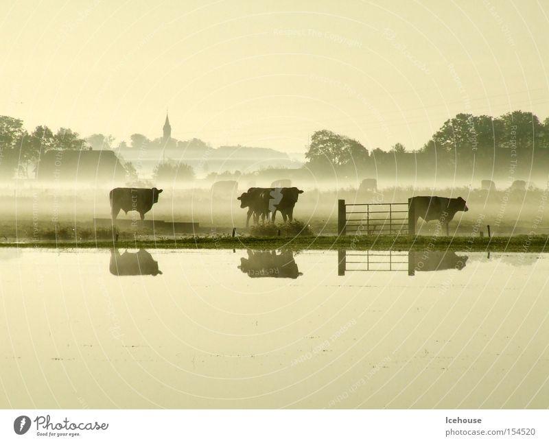village idyll Cow Fog Lakeside Deluge Dusk Village Church Fold Mammal Autumn