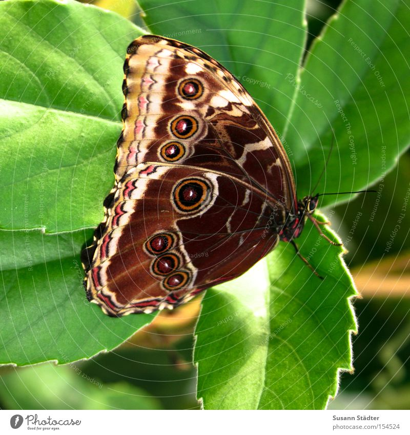 Green Beautiful Summer Leaf Spring Elegant Fresh Wing Butterfly Virgin forest Spider Animal