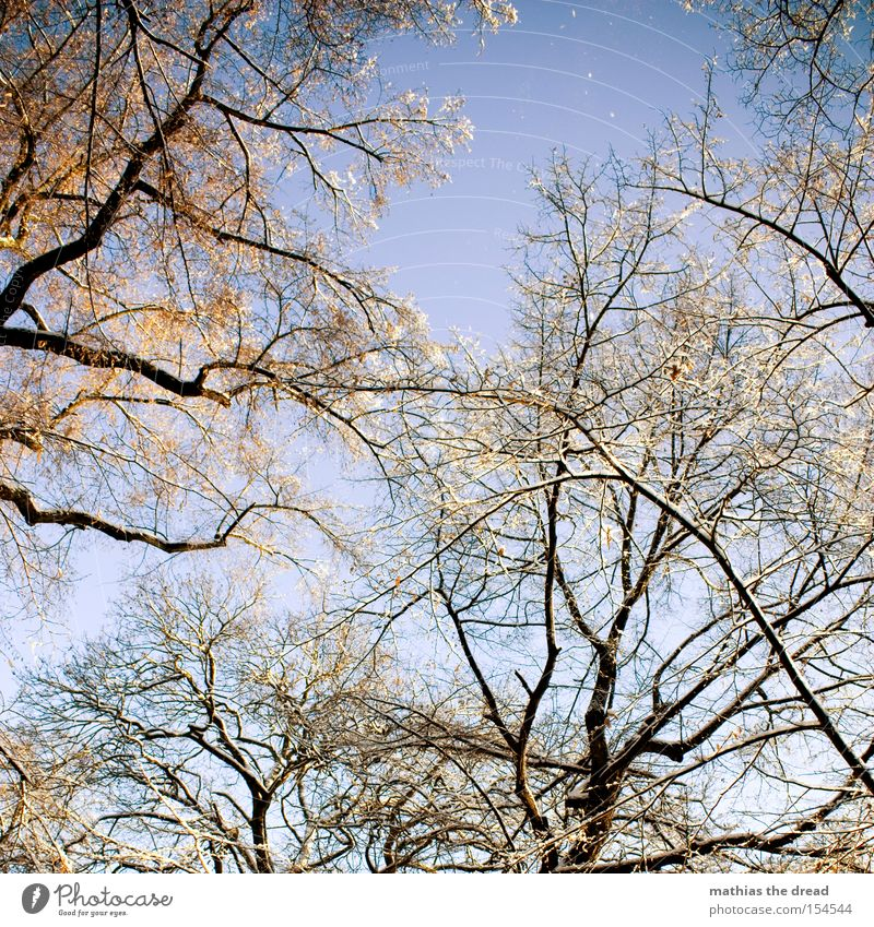 Beautiful Sky Tree Winter Leaf Snow Branch Idyll Beautiful weather Treetop Bleak Part of the plant