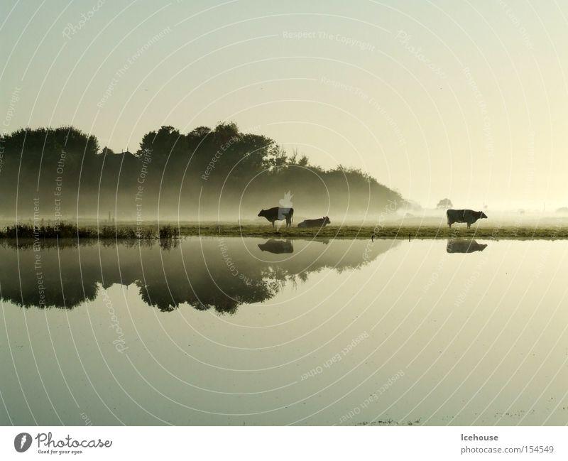 Water Calm Autumn Lake Rain Fog Cow Calm Deluge