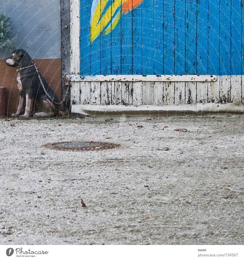 Dog Wood Facade Sit Decoration Gloomy Safety Asphalt Gate Watchfulness Trashy Chain Mammal False Weathered Deception