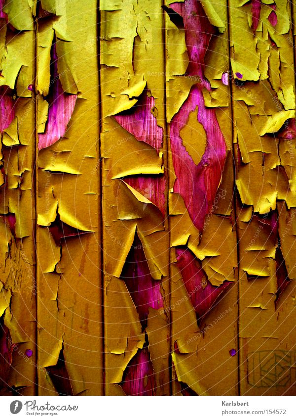 Herbstlack und Herbstlaub[e] Old Leaf Colour Autumn Wall (building) Wood Dye Wall (barrier) Line Art Design Facade Esthetic Transience Stripe Wallpaper
