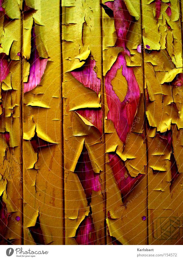 Herbstlack und Herbstlaub[e] Old Leaf Colour Autumn Wall (building) Wood Dye Wall (barrier) Line Art Design Facade Esthetic Transience Stripe Wallpaper