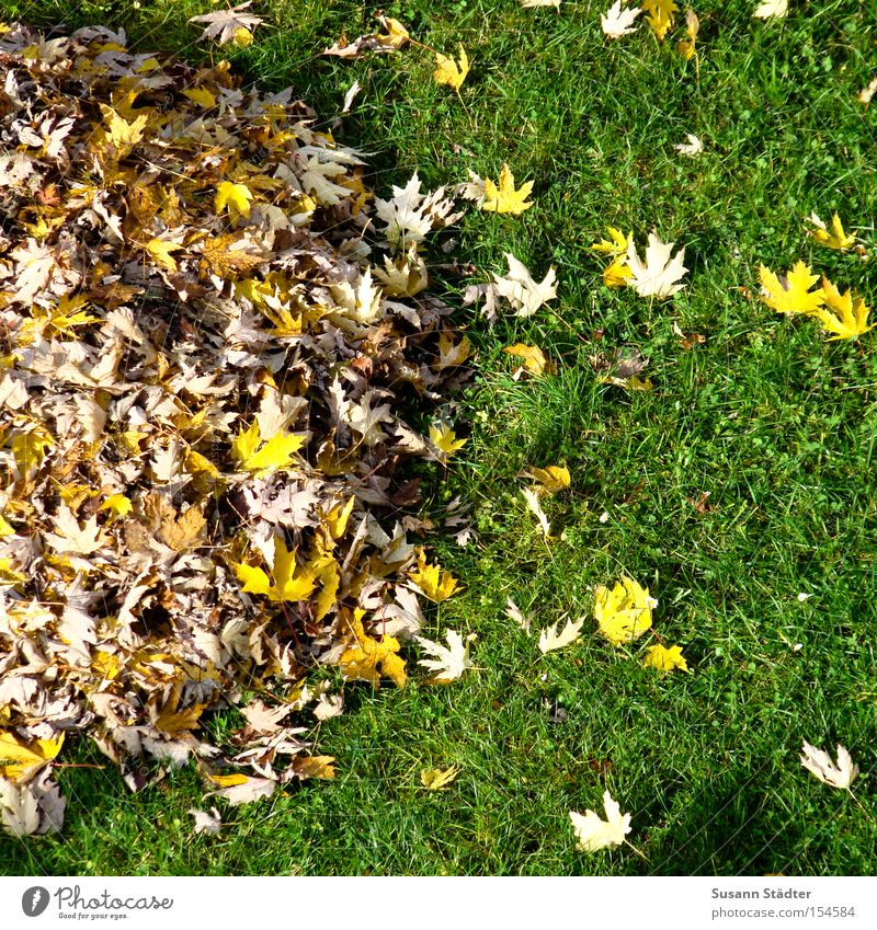 For friends of the heap principle Heap Leaf Autumn Meadow Grass Dream Trash Recycling Multicoloured Colour Pure Dustman Janitor