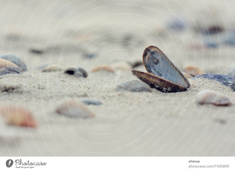 defeatist Beach Mussel Mussel shell Shell sand Packaging Sand Pearl Esthetic Authentic Beautiful Happy Romance Curiosity Wanderlust Adventure Bizarre Mysterious