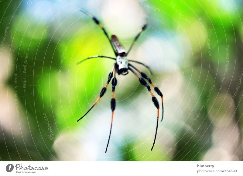 Green Animal Legs Dangerous Threat Net Living thing Trap Spider Poison Spider's web Ambush Spinner Spinning mill