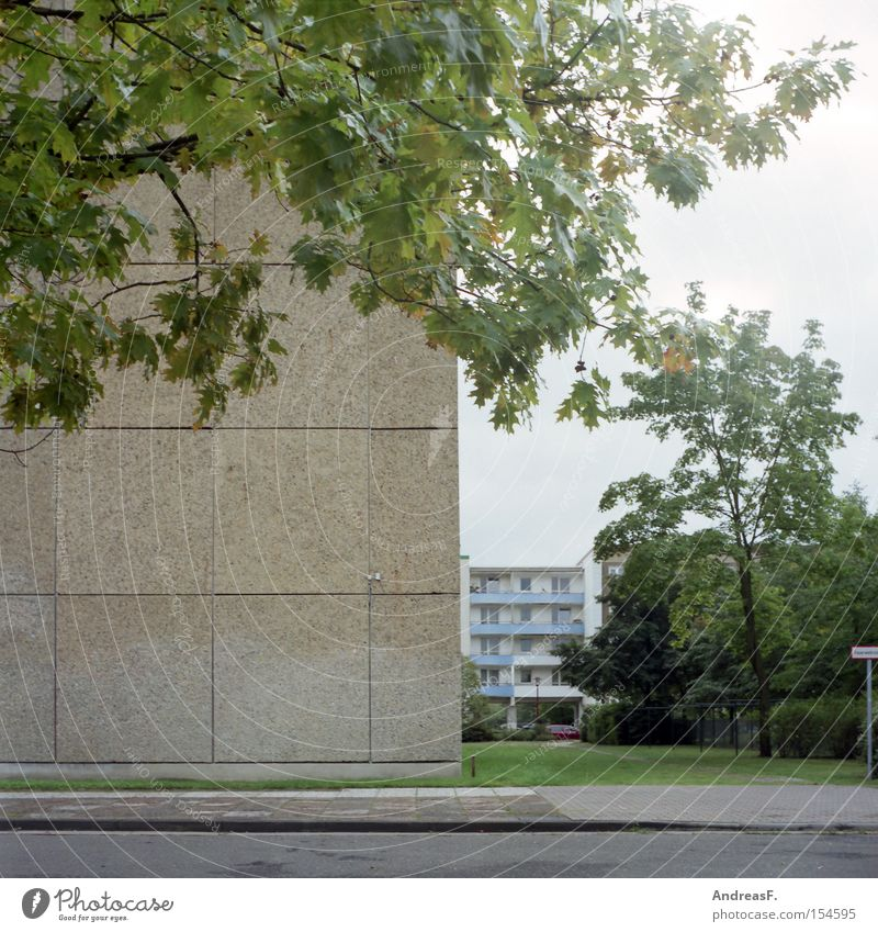 Living in the countryside Cottbus Prefab construction GDR Living or residing Residential area Ghetto Concrete Green Tree Autumn Facade Flat (apartment) Leaf
