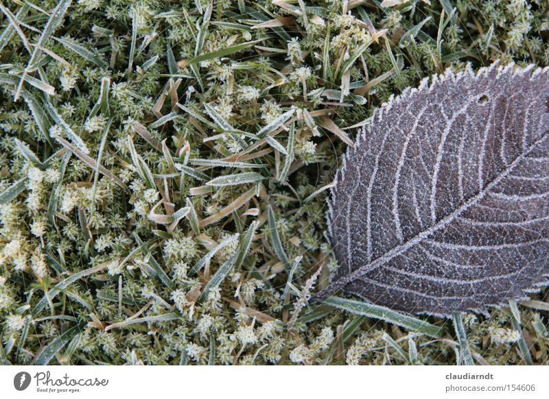 ice flowers Cold Frost Winter Hoar frost Ice Ice crystal Freeze Frozen Leaf Grass Lawn Frostwork Snow
