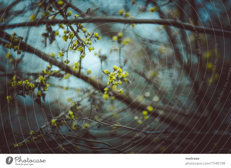 translucent Environment Nature Sky Spring Plant Flower Bushes Blossom Wild plant Twigs and branches Bud Flowering plant Flowering plants Forest