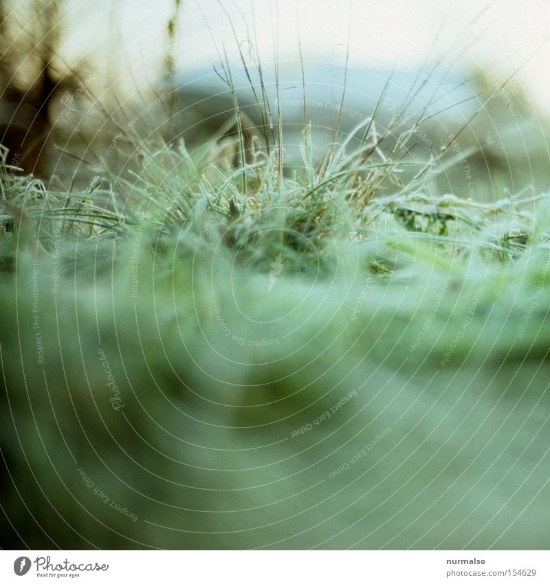 Nature Green Winter Cold Snow Grass Park Frost Lawn Grass surface Freeze Blade of grass Wake up Bushy