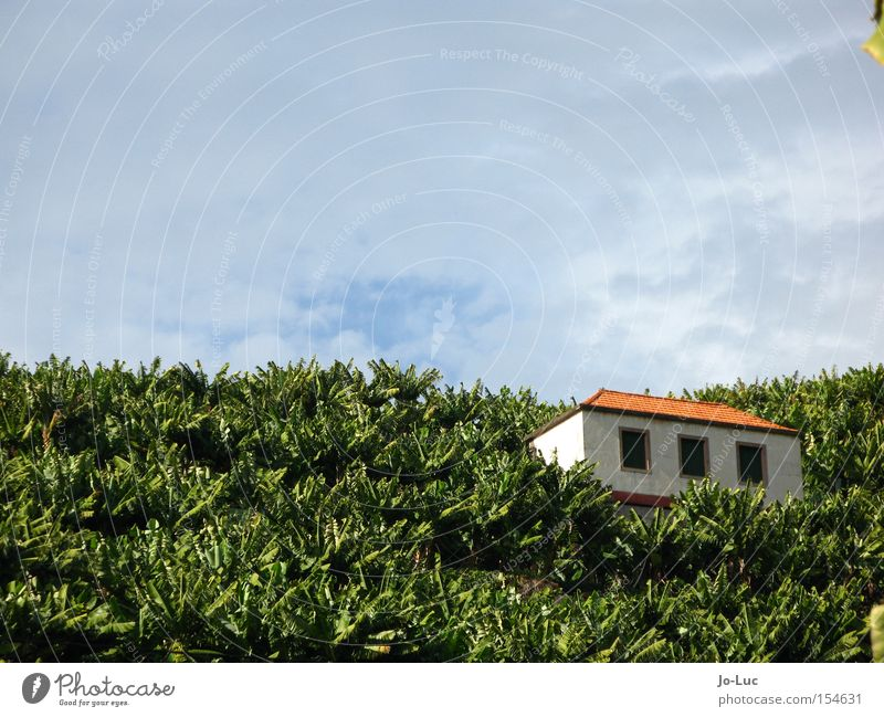 all Banana Field Plant Herbaceous plants Green Tree House (Residential Structure) Hut Window Roof Sky Clouds Blue
