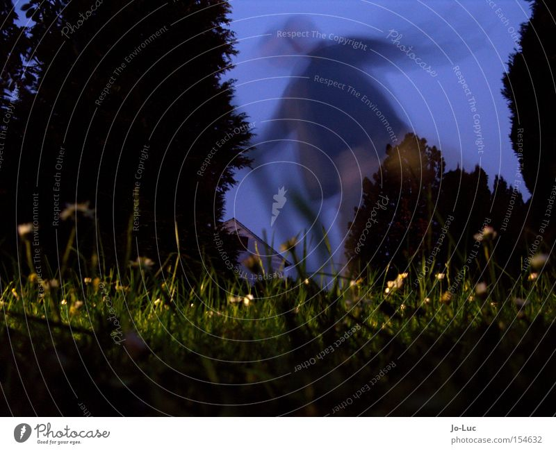 Solanaceous plant Meadow Green Flower Blossom Yellow Sky Blue Night Dark Shadow Long exposure Blur Movement Human being