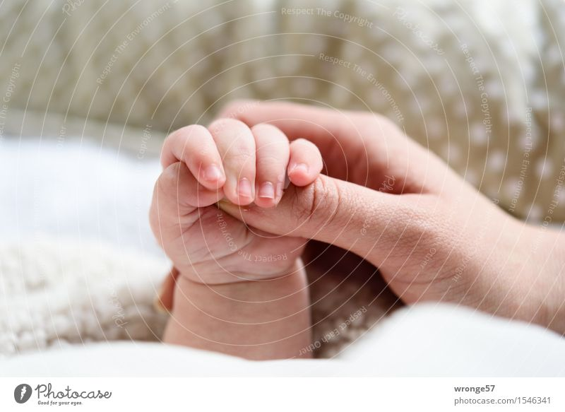 STOP Baby Girl Arm Hand Fingers 2 Human being 0 - 12 months 30 - 45 years Adults To hold on Together Gray Pink White Humanity Happy Retentive Small Graceful