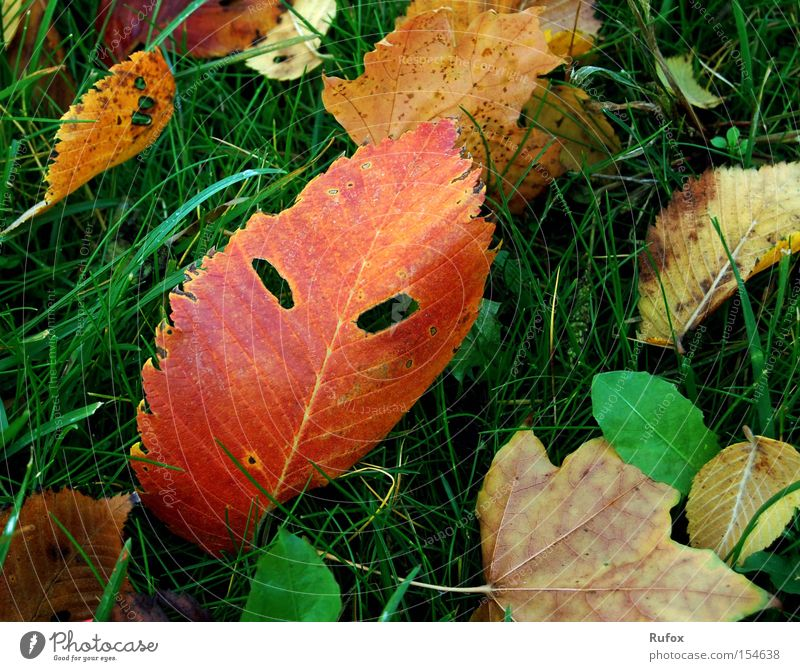 Nature Green Beautiful Tree Red Leaf Face Meadow Autumn Grass Fear Exceptional Wild Crazy Might Ground