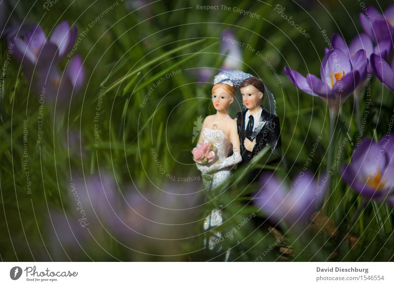 It's nicer with two people Wedding Woman Adults Man Couple Partner Body Spring Summer Beautiful weather Flower Garden Meadow Dress Suit Happy Contentment