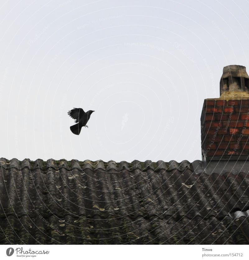 Sky Bird Flying Beginning Aviation Gloomy Roof Wing Brick Chimney Fairy tale Departure Jackdaw Witch's house