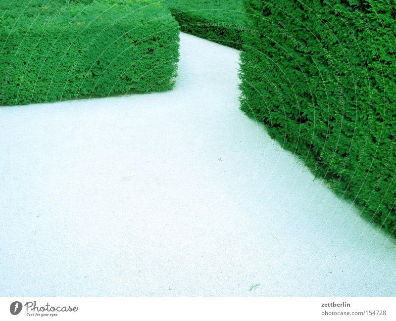 Green Relaxation Garden Lanes & trails Park Search Trust Hedge Maze Labyrinth Misunderstanding Aberration