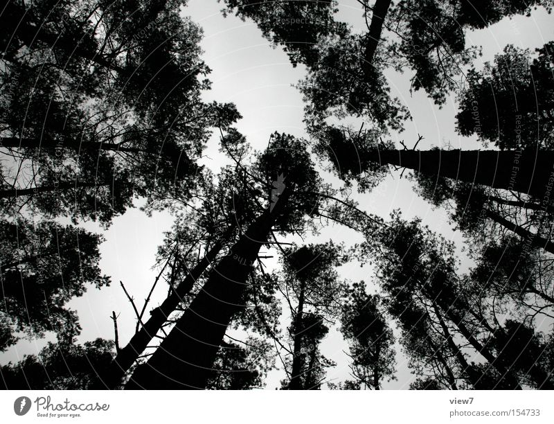 Rodtschenko type Calm Winter Nature Sky Tree Forest Above Loneliness Treetop Coniferous forest Spooky Evening Night Silhouette Looking