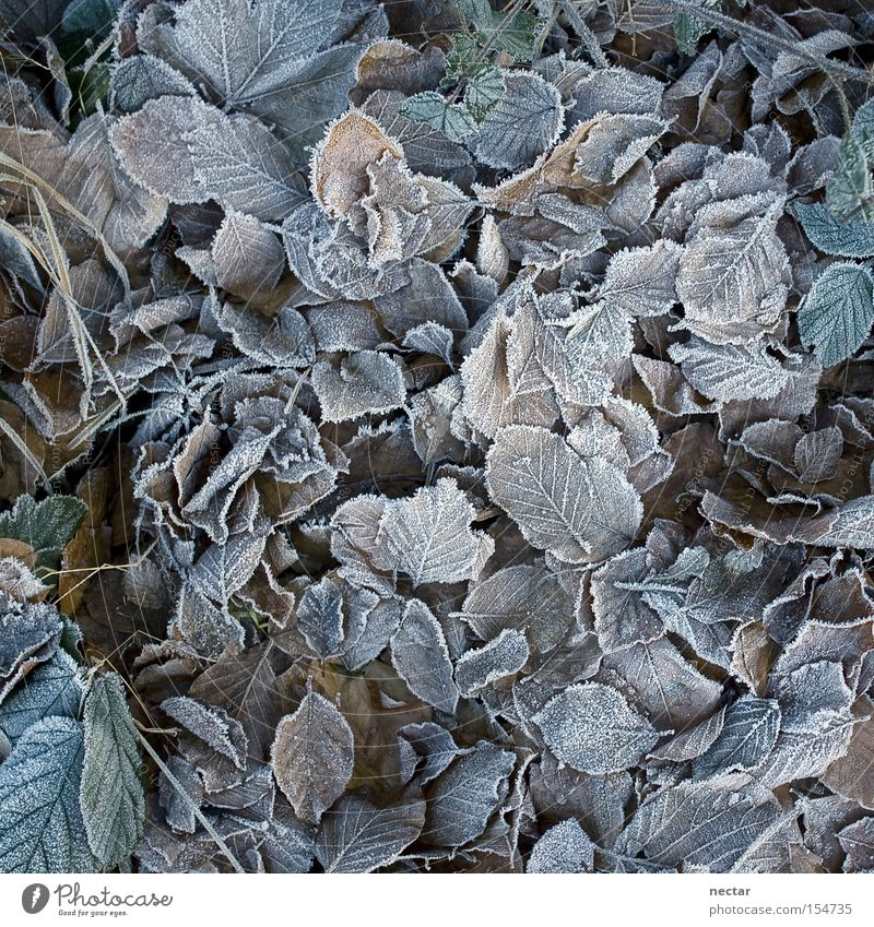 frosties Colour photo Exterior shot Close-up Detail Pattern Structures and shapes Deserted Neutral Background Twilight Shadow Bird's-eye view Calm Winter Plant