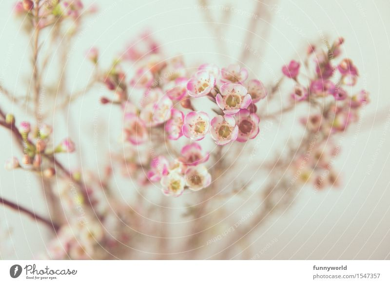 Delicate wax flowers Spring porcelain flower Ornamental plant Plant Blossom Interior shot Easter Colour photo Flower Nature Blossoming Bouquet Pink White