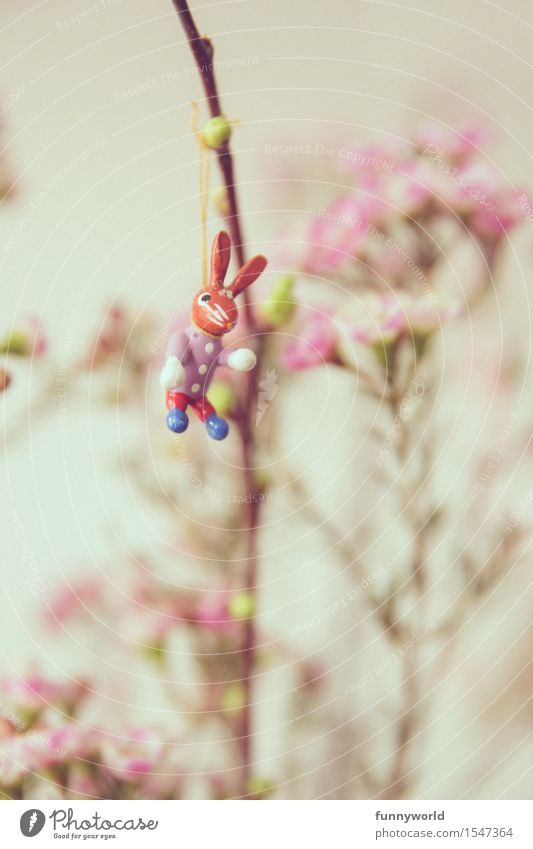 Easter shasha Hang Spring Easter Bunny Funny Loneliness Single Bouquet Flower Pink 1 Hare & Rabbit & Bunny Decoration Easter gift Blossom Colour photo