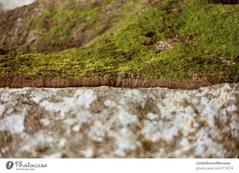 Tree Green Gray Stone Rock Soft Moss Hard