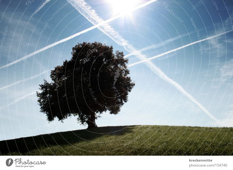 Dream tree airspace Autumn Tree Clouds Hill Meadow Grass Nature To go for a walk Switzerland Sky Deciduous tree Environment Green Leaf Airplane Aviation