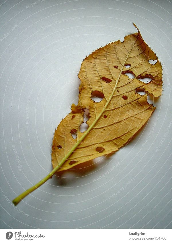 Nature White Plant Leaf Autumn Brown Transience Decline Hollow Resume