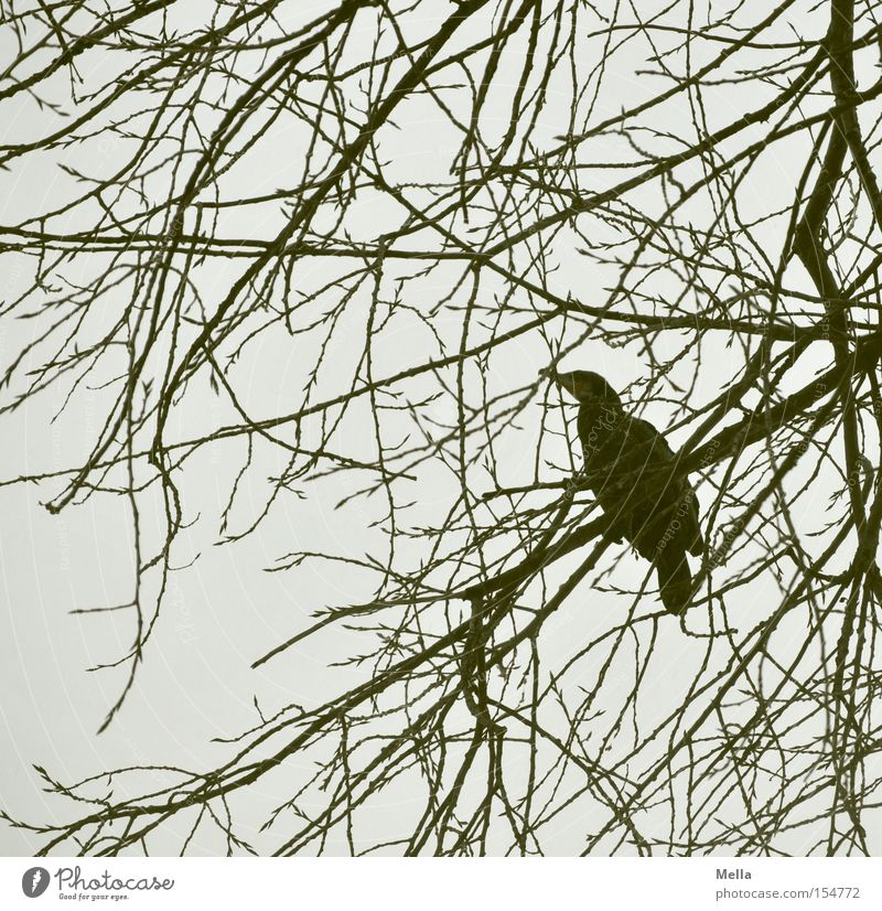 Nature Tree Loneliness Animal Gray Bird Environment Sit Natural Branchage Crouch Twigs and branches Cormorant