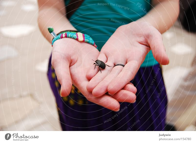 Bugs. Beetle Insect Hand Fingers Woman Animal Black Crawl Disgust Large Feeler Summer Stone Minerals dung beetle