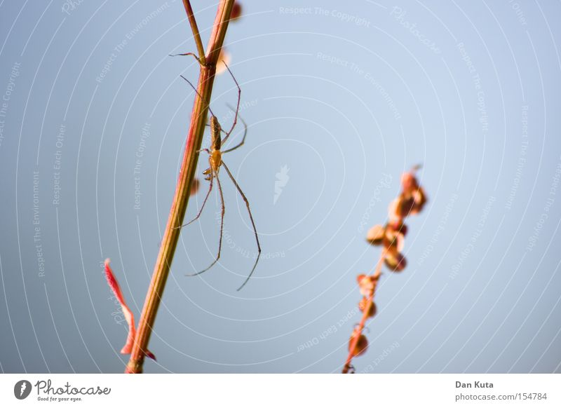 Nature Beautiful Fear Net Thin Panic Spider Crawl Magnifying glass Delicate Enlarged Thick-jawed spider