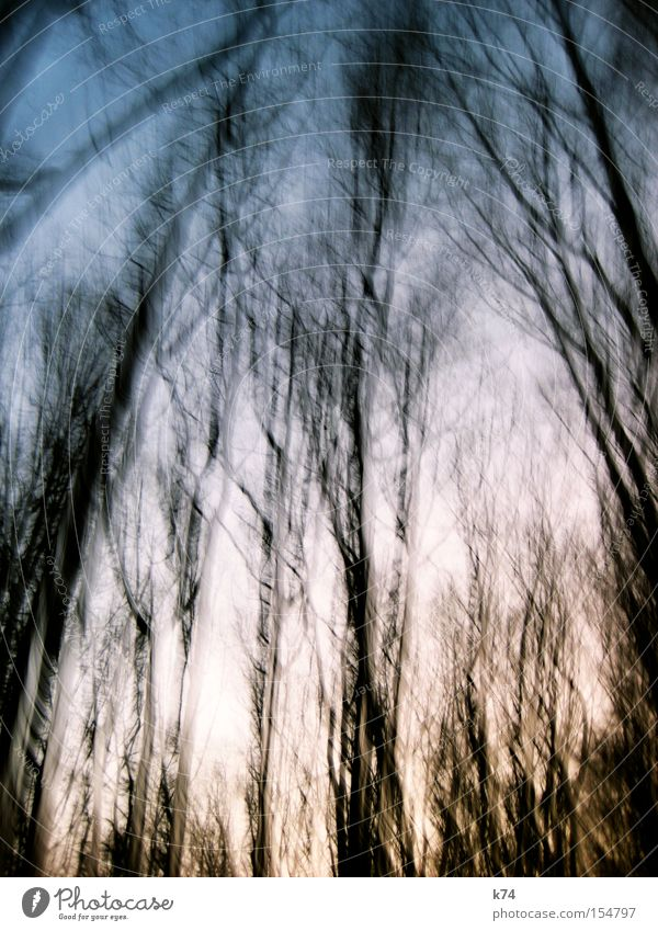 forest Tree Forest Nature Winter Leaf Movement Time Oxygen Air Twilight Sunrise Treetop To fall Unclear Snapshot