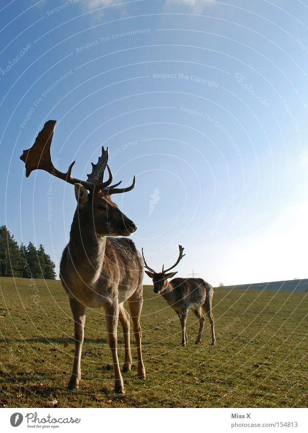 Green Animal Winter Meadow Wild animal Antlers Mammal Deer Roe deer Reindeer Enclosure Game park