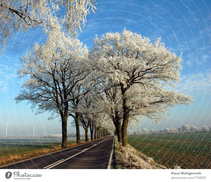 First frost Winter Snow Landscape Sky Clouds Ice Frost Tree Field salow Transport Street Loneliness Hoar frost Avenue Twig Asphalt Colour photo Exterior shot