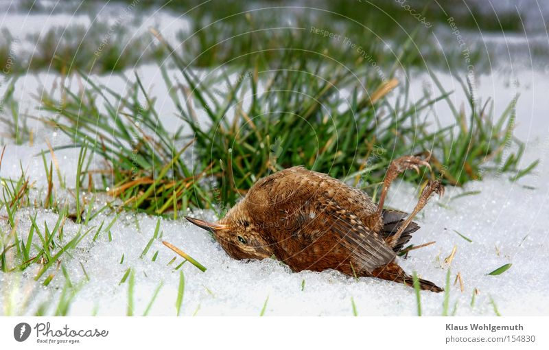 Winter Cold Snow Meadow Death Grass Ice Bird Frost Feather Blade of grass Nature