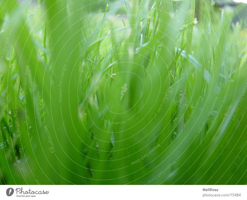 grass Grass Spring Screening Macro (Extreme close-up) Garden