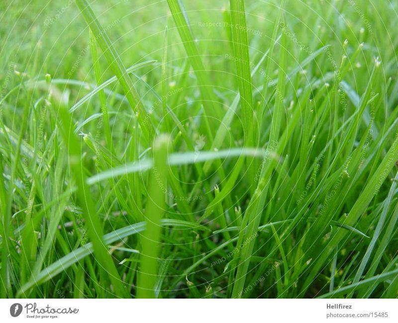 morning idyll Grass Spring Macro (Extreme close-up) Freshly done