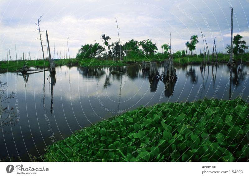 Nature Water Dark Landscape Moody USA Americas Marsh Louisiana